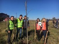 YUNUS EMRE - Kırklareli'de Gençler Ihlamur Ağacı Dikti