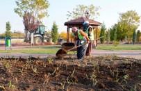 LALE SOĞANI - Meram'da Parklar Kışa Hazırlanıyor