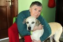 YEŞILKÖY - Kredi Çekti, Arabasını Satıp Hayatını Köpeklere Adadı