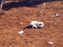 YAVRU KÖPEK - Şanlıurfa'da Sevimli Hayvanların İlginç Görüntüleri
