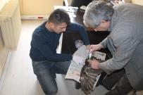 KAFKAS ÜNİVERSİTESİ - Saz Delicesi Ve Kızıl Tilki Tedavi Altına Alındı