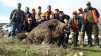 YABAN DOMUZU - Sezonun En Büyüğü Olmaya Aday, Tam 262 Kilo