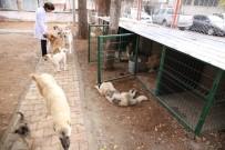 BATMAN BELEDIYESI - Sokak Hayvanları Kışın Üşümeyecek