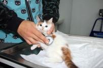 YAVRU KEDİ - Sokakta Bulunan Yavru Kedinin Kalbi Sağda Çıktı