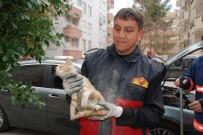 YAVRU KEDİ - Aracın Motoruna Giren Yavru Kedi 2 Saatte Kurtarıldı