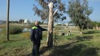 ALI UYSAL - Burhaniye İmko Tatil Sitesi'nde Budama Tartışması