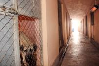 MUSTAFA ARSLAN - Sokak Hayvanlarına Isıtıcılı Koruma