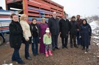 ÇAKıRLı - Suşehri'nde Genç Çiftçilere Küçükbaş Hayvan Dağıtıldı
