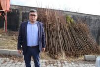 MEHMET NURİ ÇETİN - Varto Belediyesinden Ağaçlandırma Çalışması