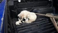 Kaya Boşluğuna Yavrulayan Köpek Ve Yavrular Kurtarılarak Sahiplerine Verildi