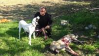 TAŞAĞıL - Sokak Köpeği Av Tüfeğiyle Vurularak Öldürüldü, 1 Kişi Gözaltına Alındı