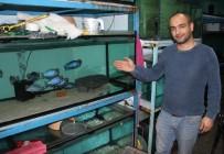 EVCİL HAYVAN - Bu Balığı Görenler Hayrete Düşüyor