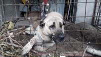 MEHMET ACAR - Çoban Köpeği Boğulmaktan Son Anda Kurtarıldı