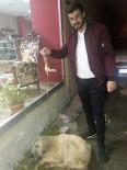 SOKAK KÖPEĞİ - Hasta Sokak Köpeğine Serum Bağlattı