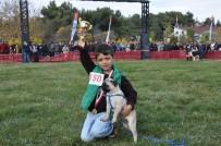 ÇOBAN KÖPEĞİ - Köpeklerin Güzellik Yarışması Finali İzmir'de Yapıldı