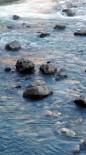 SEYHAN NEHRİ - Nehirde Mahsur Kalan Yavru Kediyi Cankur Kurtardı
