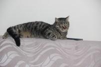 ERDAL ÇAKıR - Sokak Kedilerine Evlerini Açtılar