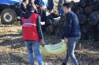 BEYCUMA - Üreten Gençlik Oldular, Tarlaya Buğday Ektiler