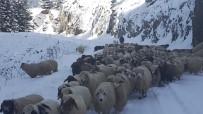 KURTARMA OPERASYONU - Yaylalarda Kalan Vatandaşlar Ve Hayvanları Kurtarılıyor