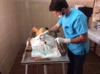SOKAK KÖPEĞİ - Adıyaman Belediyesinden Hasta Köpeğe Tıbbi Müdahale