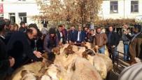 ÖZDEMIRCI - Çivril'de Yetiştiricilere Damızlık Koç Dağıtıldı