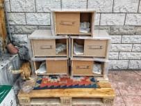 HAYVAN SEVERLER - Geleneksel Adore Kedi Evi Projesi Yeniden Başladı