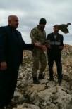 KıNALı - Kınalı Keklik Doğaya Bırakıldı