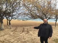 GEZİ TEKNESİ - Saros Sahilinde Yenileme Çalışmaları