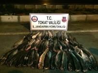 DEĞIRMENLI - Tokat'ta Sağlıksız Koşullarda Paketlenmiş 300 Kilo Balık Ele Geçirildi