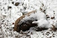 EROZYON - Tunceli'deki Keçi Ölümlerinin Nedeni Belli Oldu
