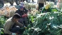 SEBZE ÜRETİMİ - Çiftçiden İstihdam Seferberliğine Destek