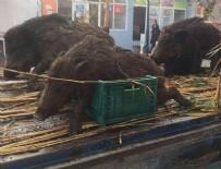 ATATÜRK ANITI - Edirne'de domuzların vurulup sergilenmesine tepki