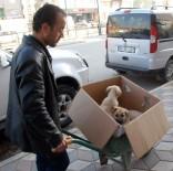 YAVRU KÖPEKLER - Hasta Olan Yavru Köpeklerini Veterinere El Arabasıyla Taşıdı