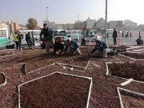 HERCAI - Kayseri'de Yaşayan Nüfus Kadar Bitki Soğanının Dikimi Yapılıyor