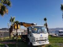 HASAN AKGÜN - Palmiye Ağaçlarına Kışlık Giysi
