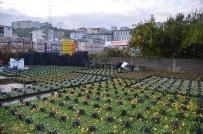 NOSTALJI - Alaplı'da Park Ve Bahçelerin Bakımı Sürüyor
