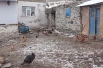 KUŞ GRIBI - Bin Kanatlı Hayvan İtlaf Edildi