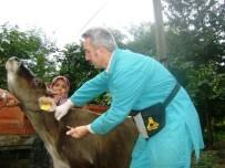 HAYVAN PAZARI - Düzce'de 21 Bin 748 Hayvana Aşı Yapıldı