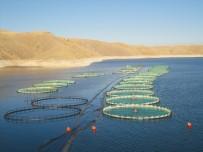 ALABALIK - Elazığ'dan 10 Ayda 6,5 Milyon Euroluk Alabalık İhracatı