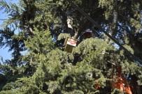 KUŞ YUVASI - Körfez'de Öğrenciler Ağaçlara Kuş Yuvası Koydu