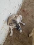 SOKAK KÖPEĞİ - Yaralı Yavru Köpek Tedavi Edildi