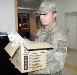 YAVRU KEDİ - Askerden Yaralı Kediye Şefkat Eli