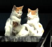 BAHAR HAVASI - İnsanlar Ve Hayvanlar Güneşin Tadını Çıkardı