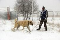 KANGAL KÖPEĞİ - Kangal Köpeği Rus Devlet Televizyonunda