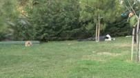 METRO İSTASYONU - Parkta Ölen Sahibinin Başından Ayrılmadı