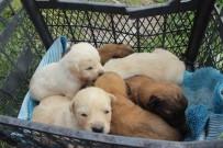 SOKAK KÖPEĞİ - Anneleri Zehirlenerek Öldürülen Yavru Köpekler Yuvalarına Kavuştu