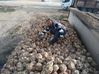ŞEKER ORANI - Hisarcık'ta Şeker Pancarı Söküm Kampanyası Başladı
