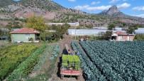 SAKARYA NEHRI - Sarıcakaya Yeşillik İhracatına Devam Ediyor
