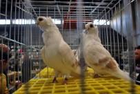 18 MART ÜNIVERSITESI - Güvercin Meraklıları Manisa'da Fuarda Buluştu