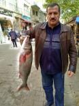 GıRGıR - Lapseki'de Ağlara 10'Ar Kiloluk Levrekler Takıldı